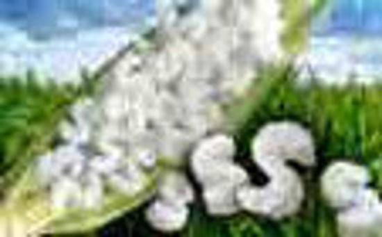 Picture of Peanuts White Bio-Degradable