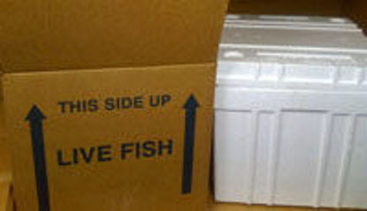 """Picture of Lobster Box Kit Includes 18 1/2 x 14 1/2 x 8 1/2"""" Box"""